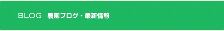 ブログ 最新情報 タイトル